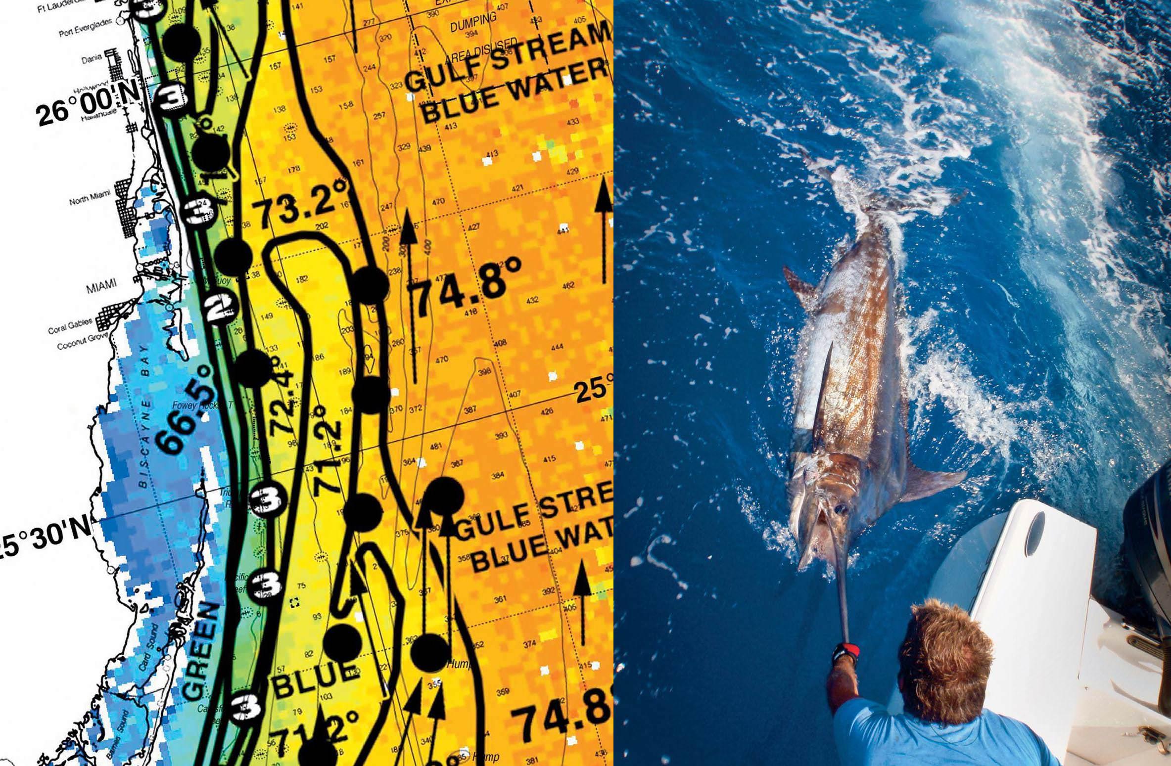 Marlin metrics for Florida sport fishing