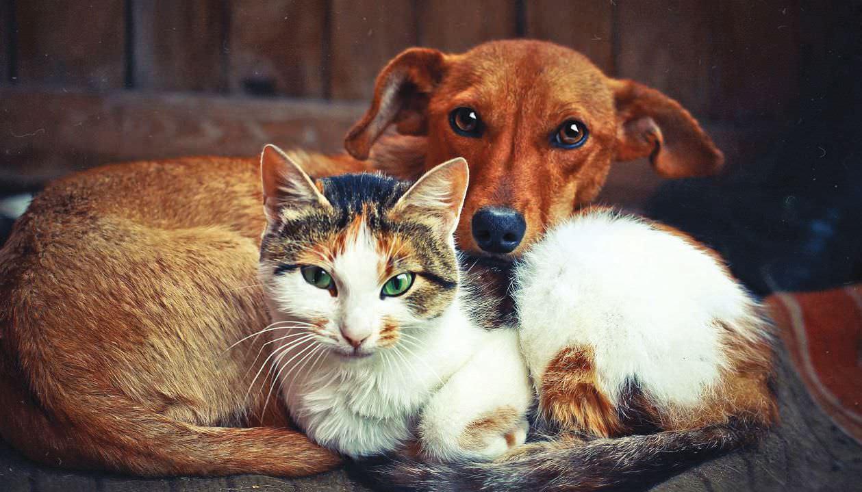 stray dogs  u0026 cats