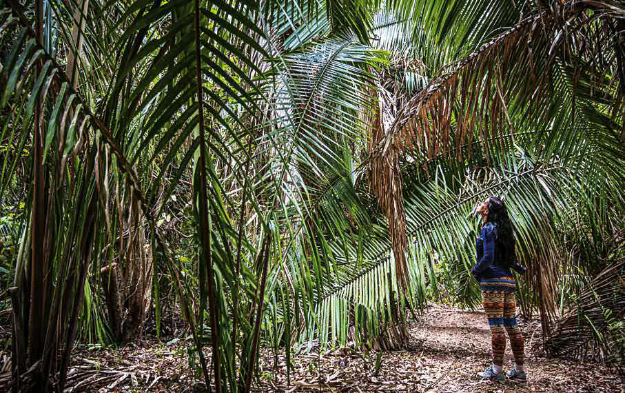En la selva tropical, como en los diversos ecosistemas de Manzanillo, escuchar, ver, imaginar al ave en la rama son un milagro inesperado.