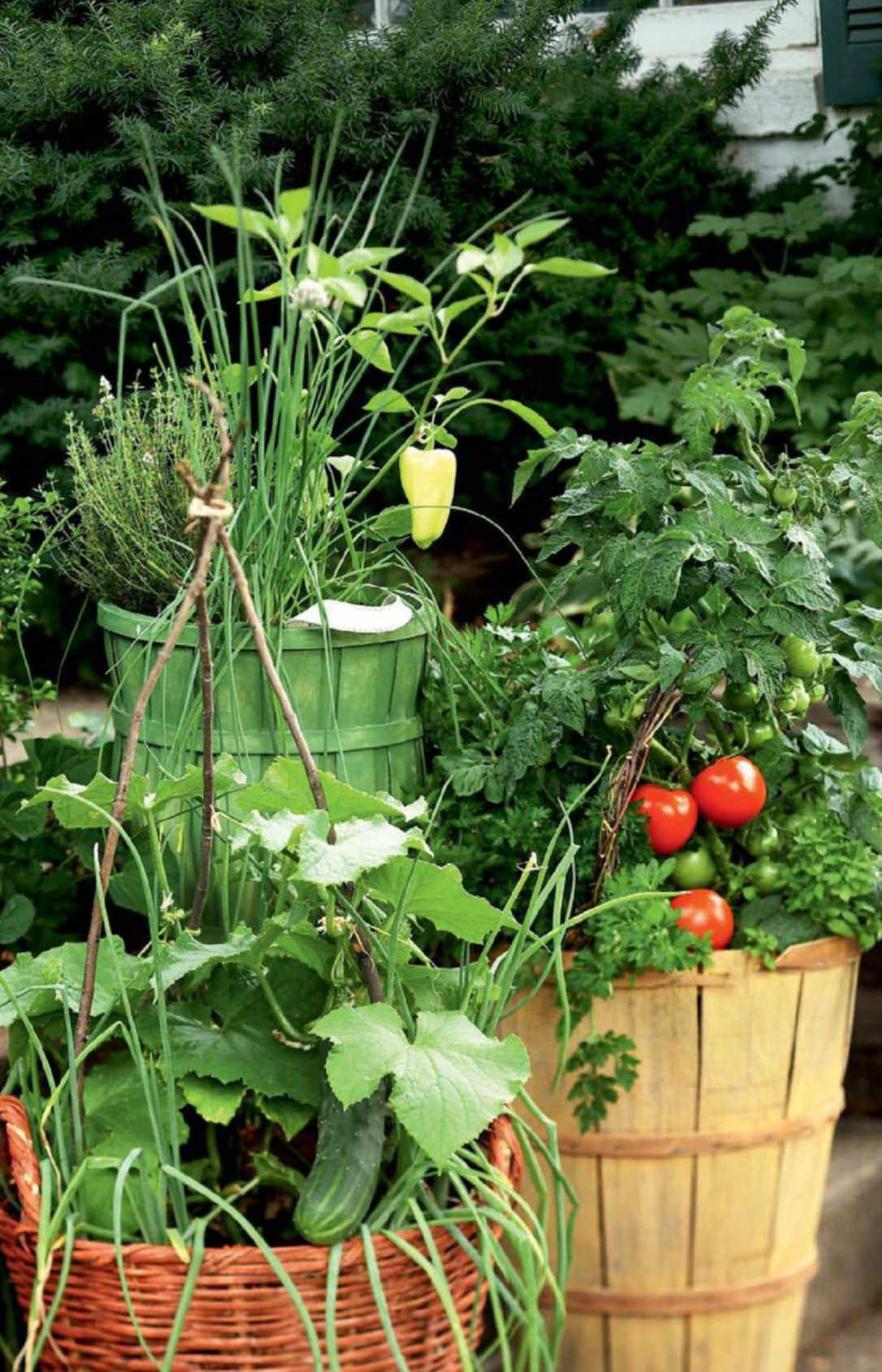 Growing vegetables, trellis, gardening - picmia.