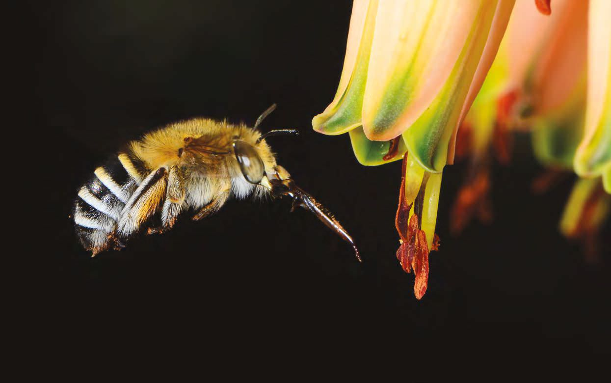 Types Of Bees - photo#38