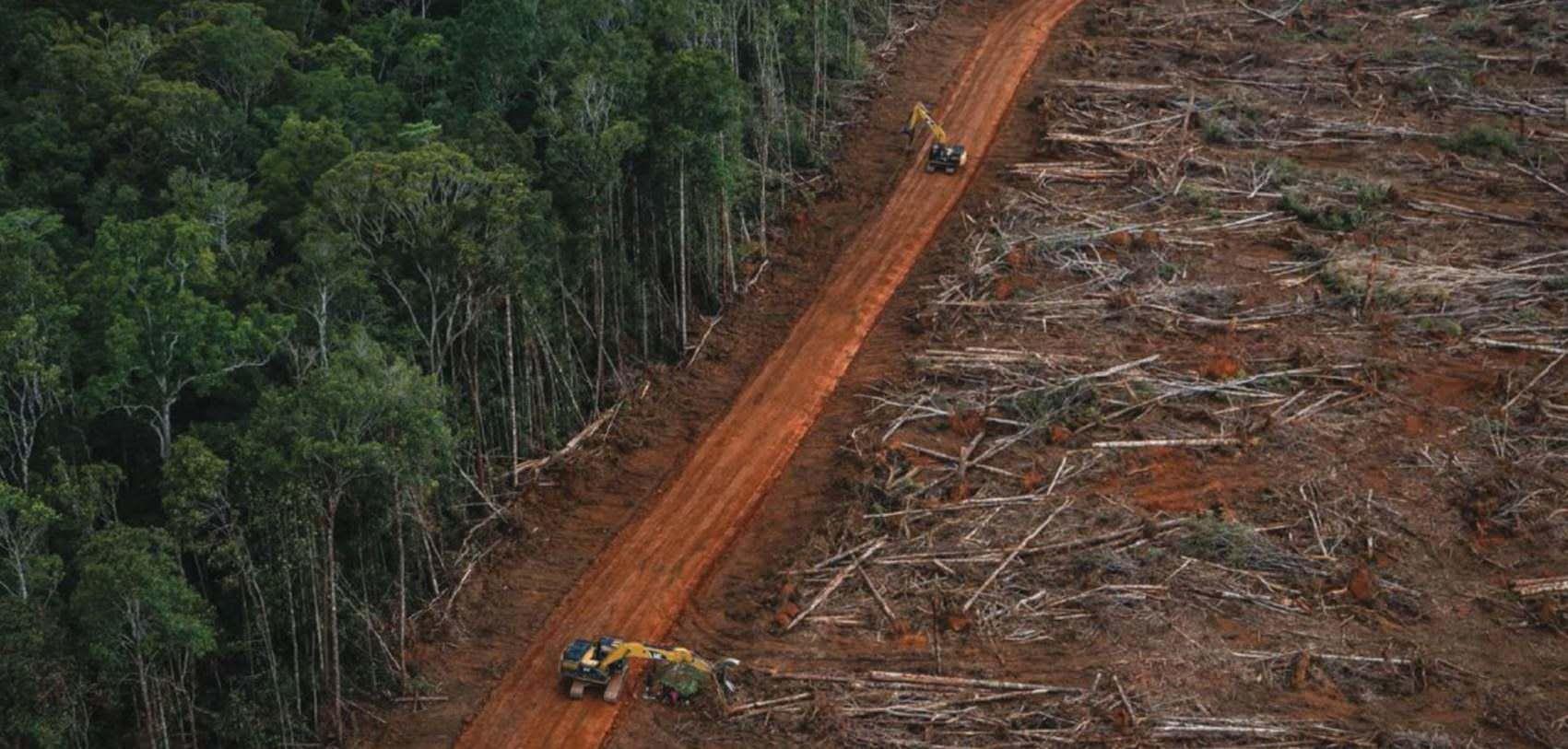 Palm Oil-fuelled Deforestation Reaches Papua