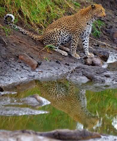 Safari - On the Wild Side