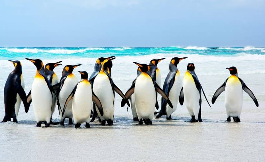 Escape To The Falkland Islands For The Ultimate Wildlife Adventure