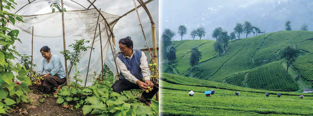 Sikkim's Rich Organic Flora And Fauna