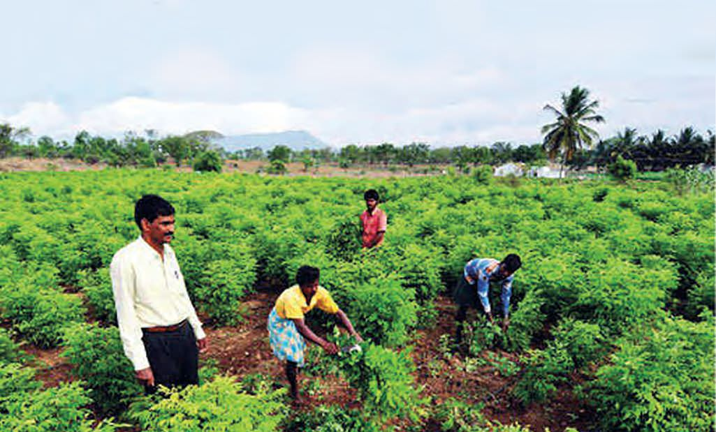 Organic Farming: A Way To Combat Soil Pollution