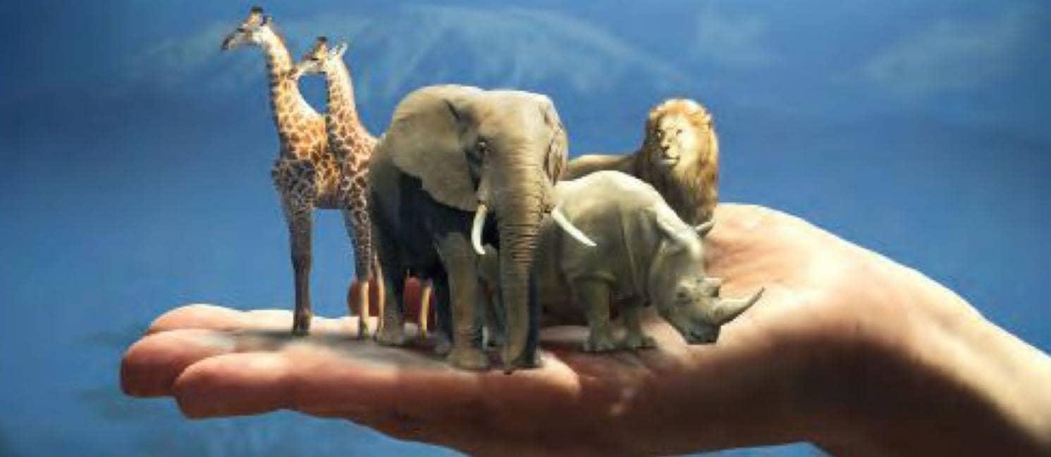 Landmark Judgements To Stop Animal Cruelty