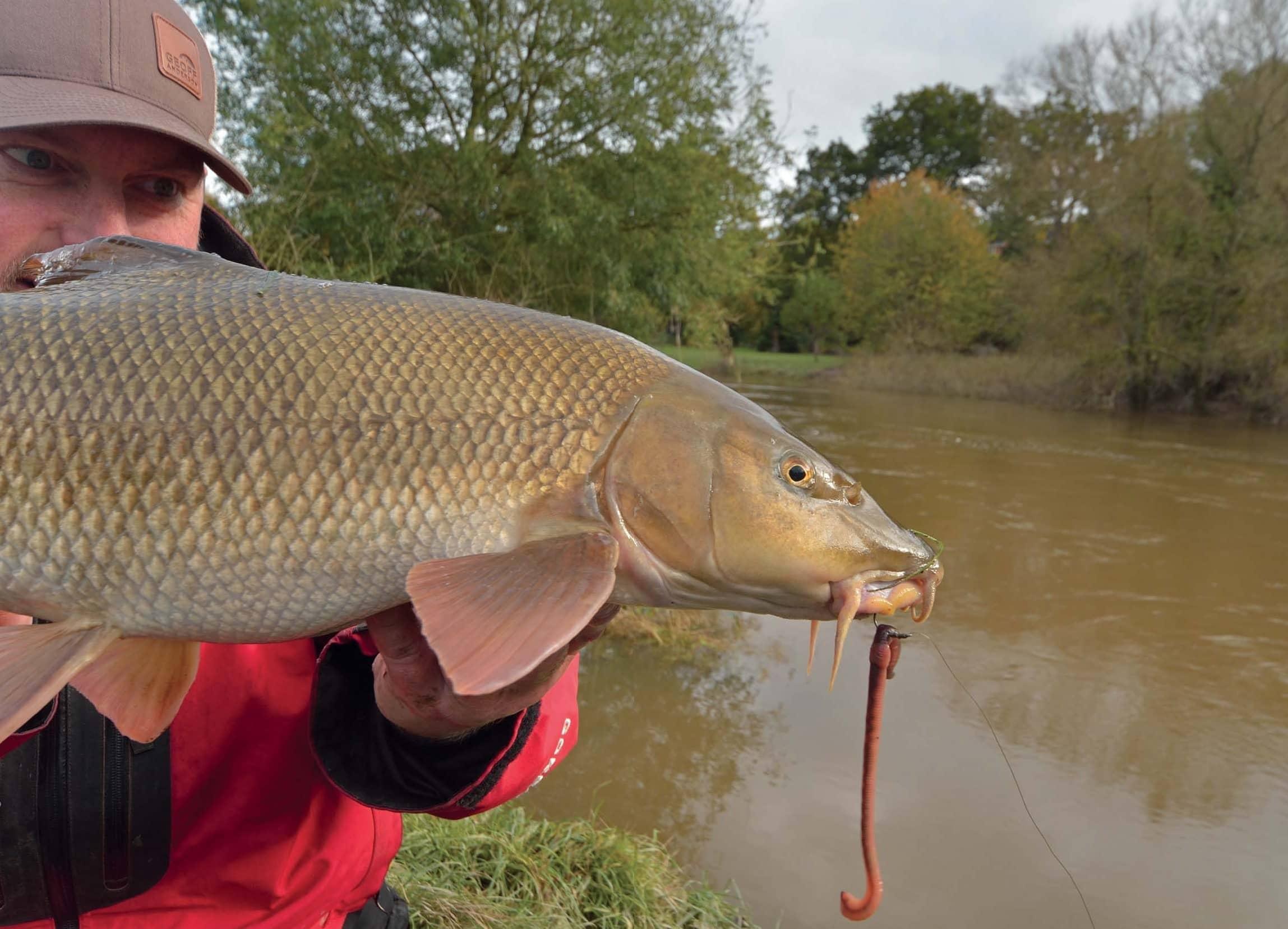 Floody Great Big Barbel
