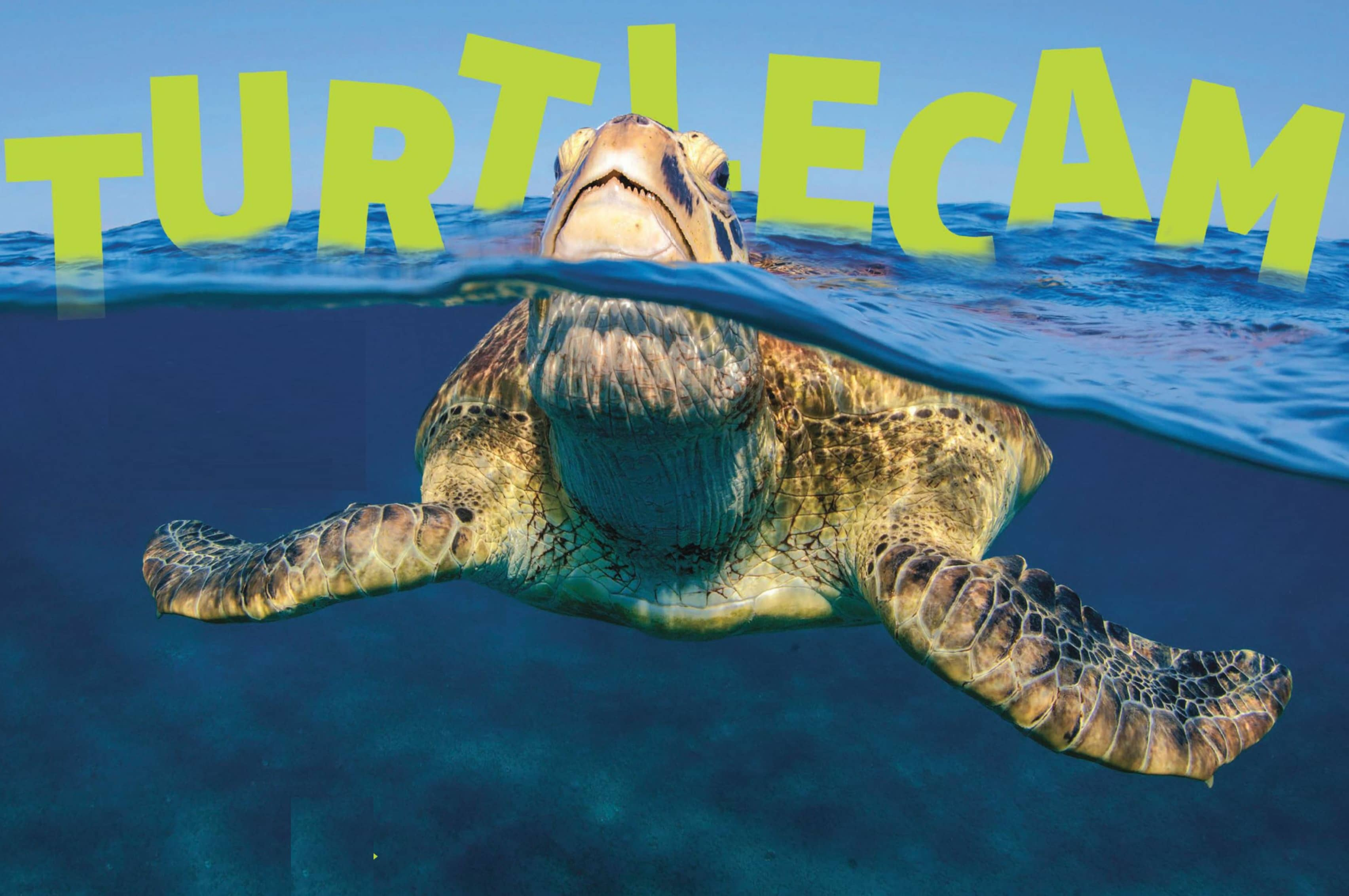 Turtlecam