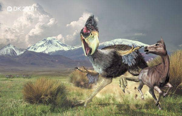 The Rise & Fall of the Terror Birds