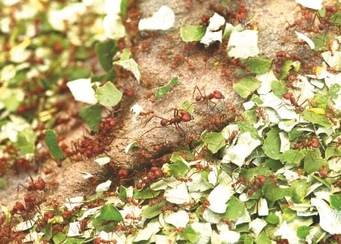 Ants Rule!