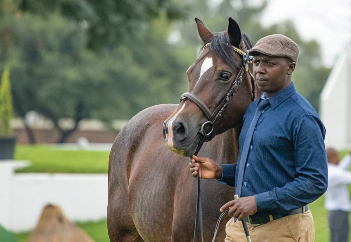 How Do You Trot Up A Horse Correctly?