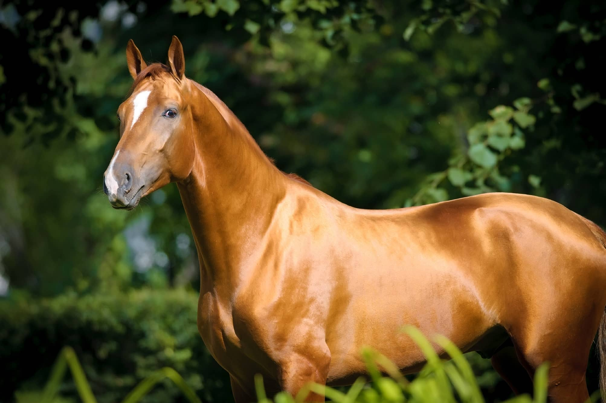 What Can I Feed My Horse To Make His Coat Shiny?