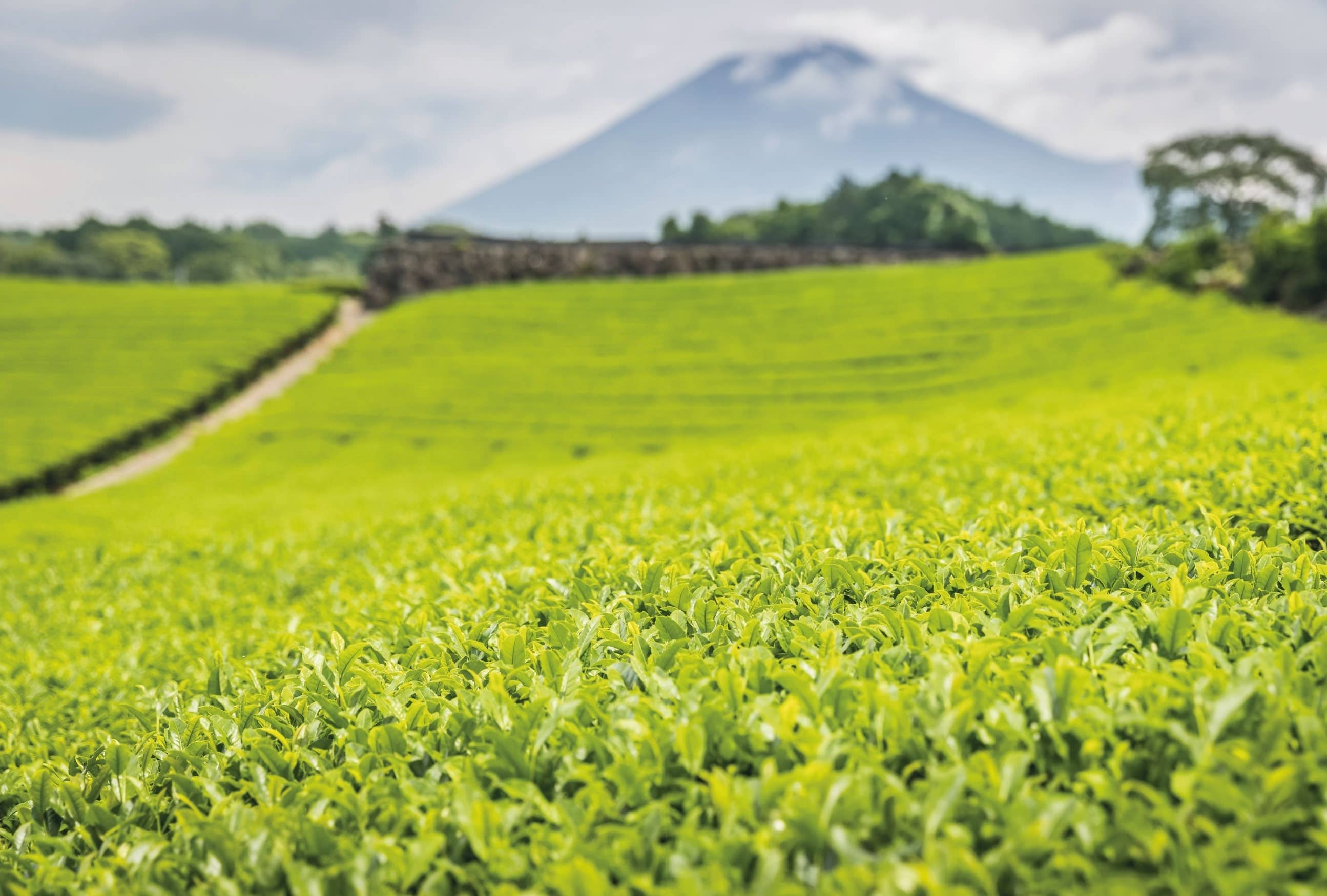 Discovering Shizuoka – A Culinary Haven For Top Quality Ingredients