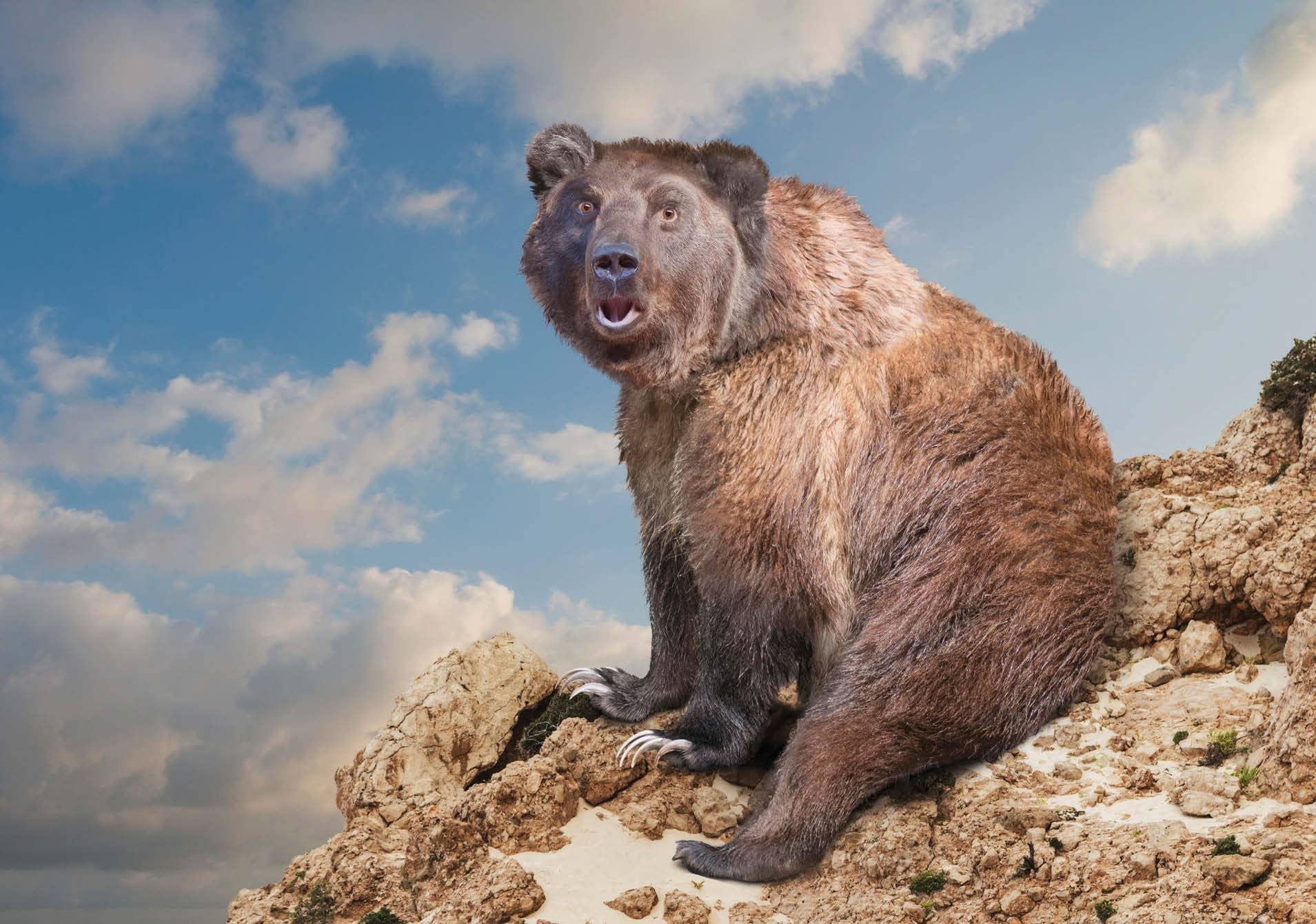 PRACTICAL PORTFOLIO: Bear Market Do's and Don'ts