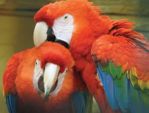 Parrot breeding Some basic advice Part I