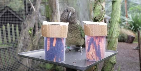 Parrots and primates