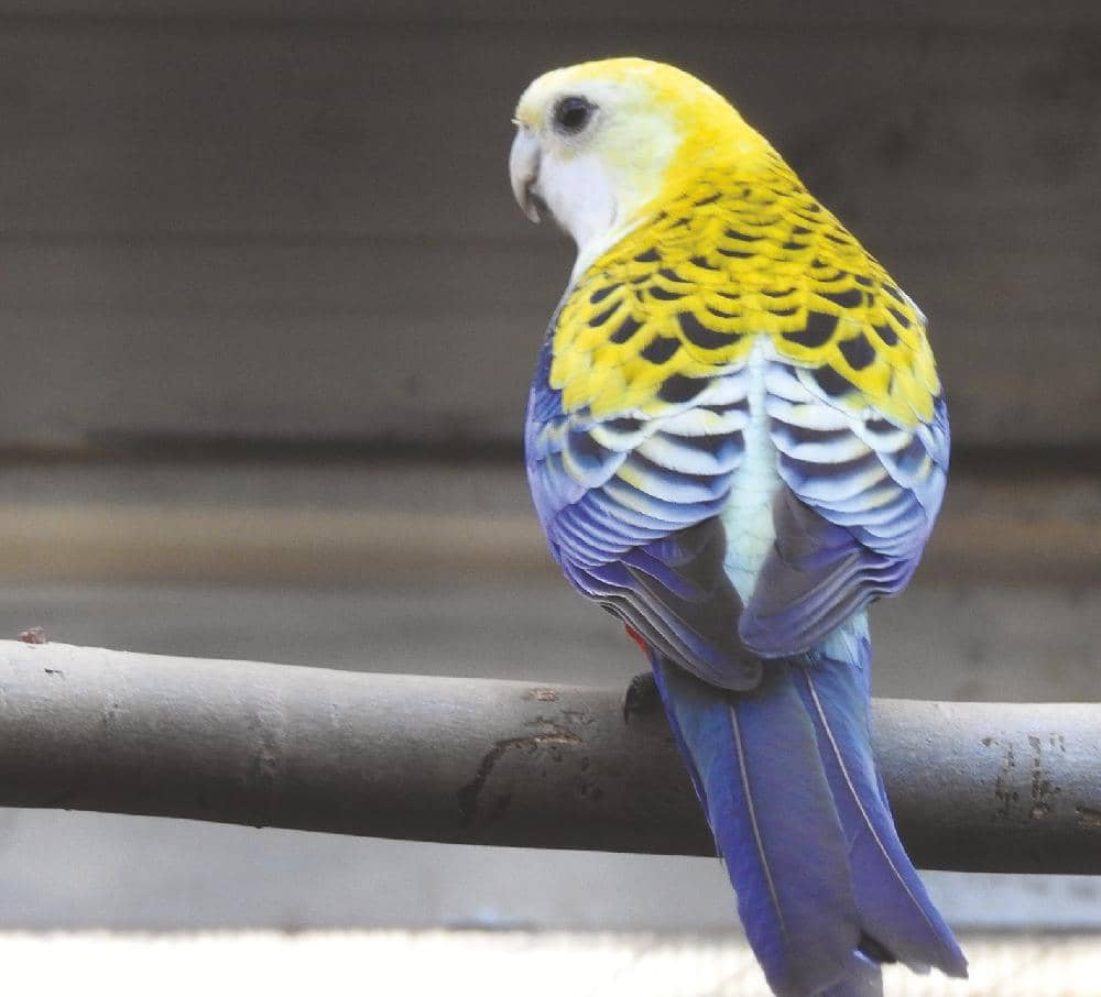 Parrot breeding Part II: Aviaries and nest sites