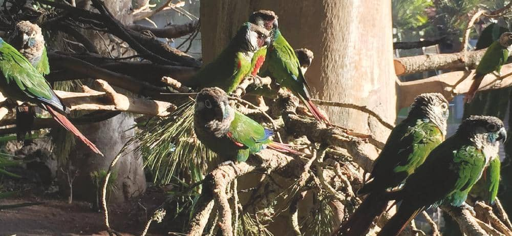 News from Loro Parque: Parrots enjoy the summer