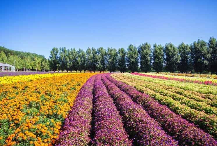 Floriculture as Career Choice