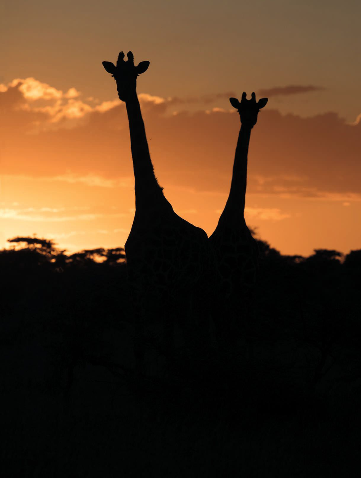 My Photographic Education Or, How I Learned To Stop Worrying And Shoot A Giraffe