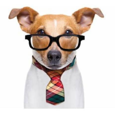 How My Dog Taught Me To Run A Successful Business