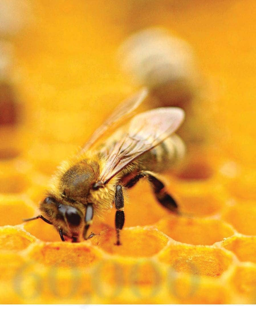 Bee-hind The Buzz