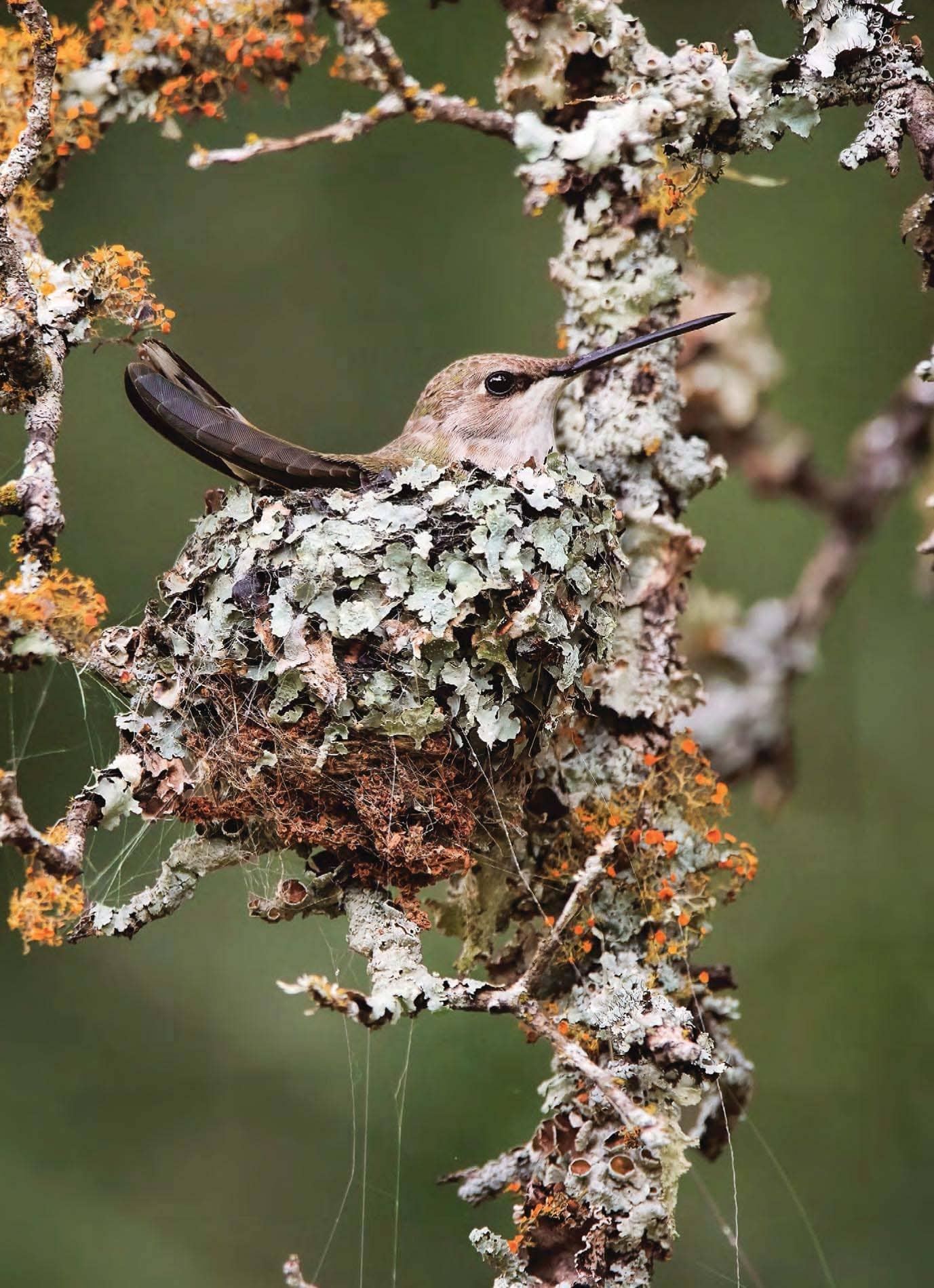 Bird Supermoms