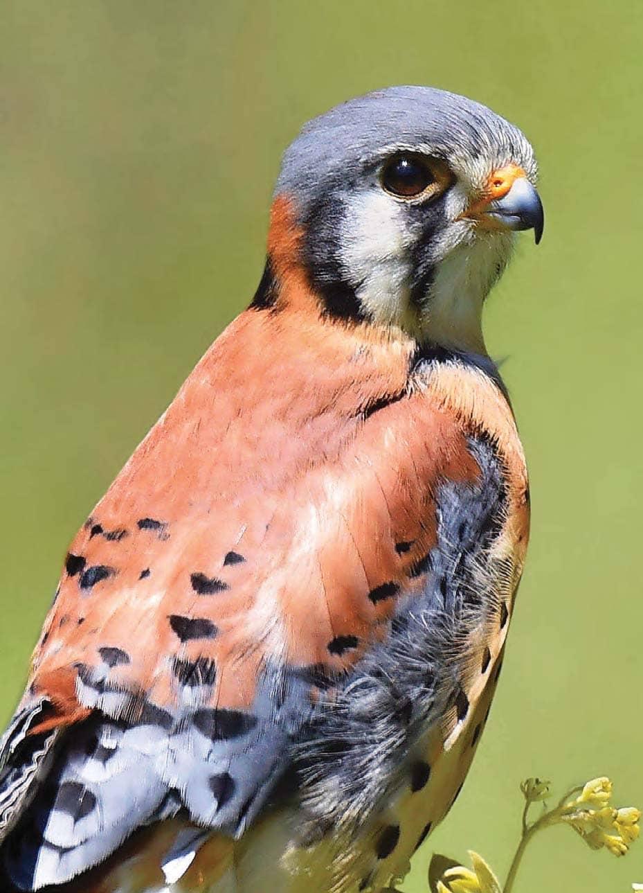 How Birds Get Named