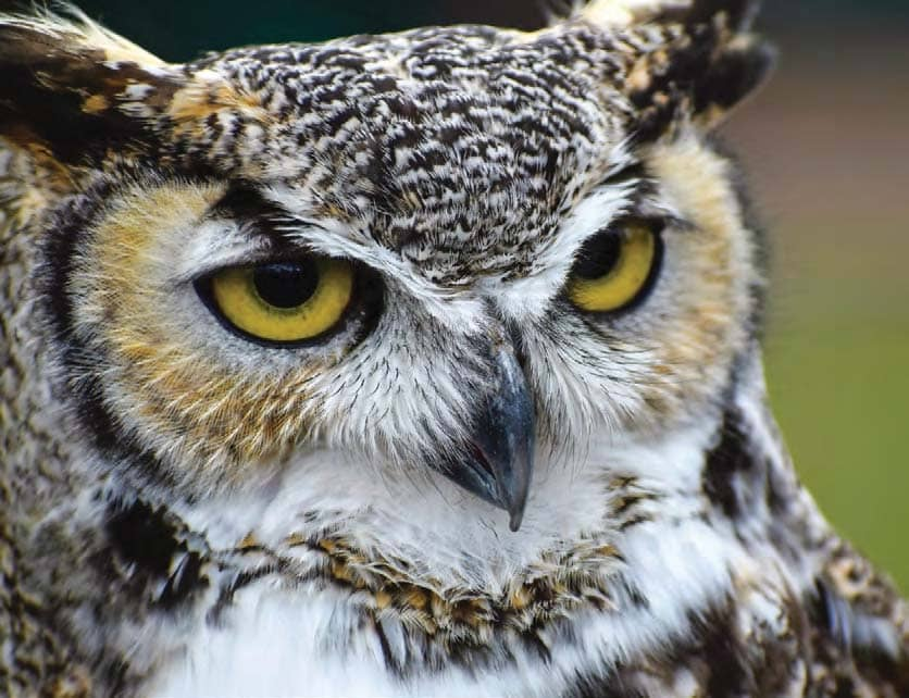 What is your favorite owl and why?