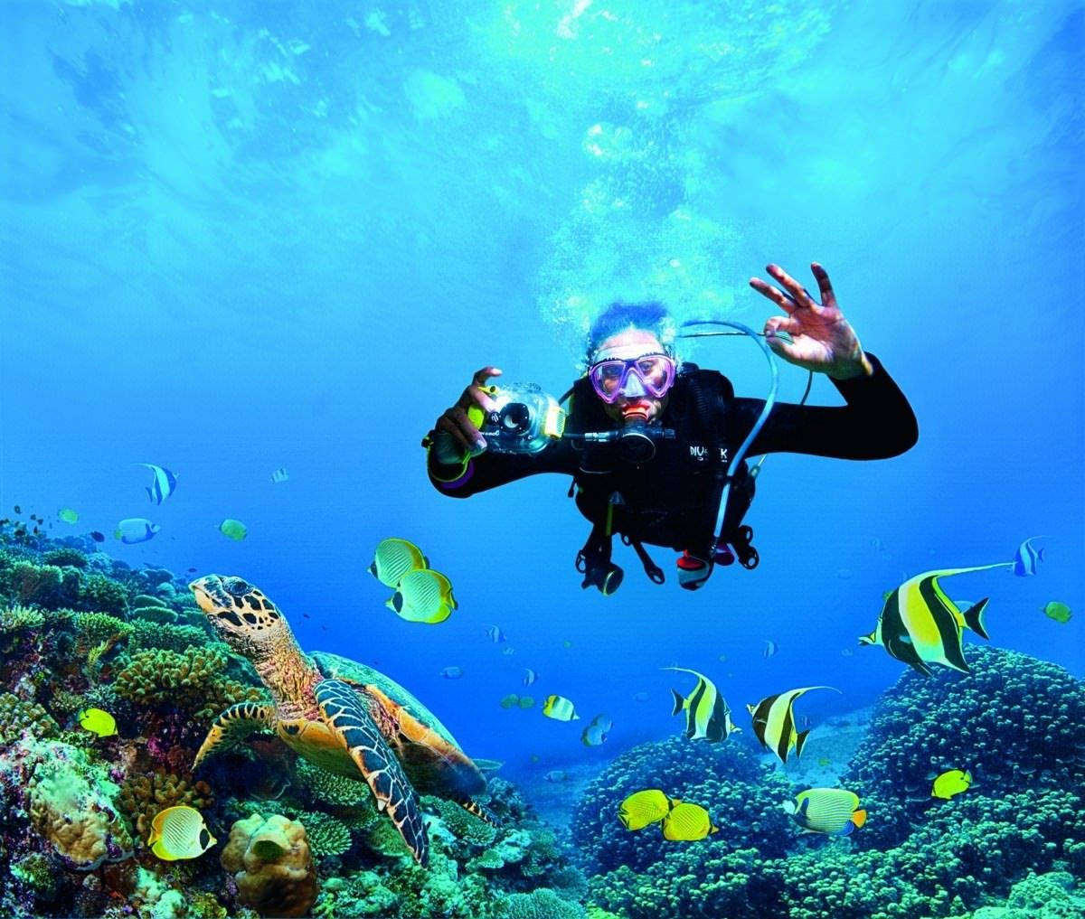 Uncovering Oceanic Allure