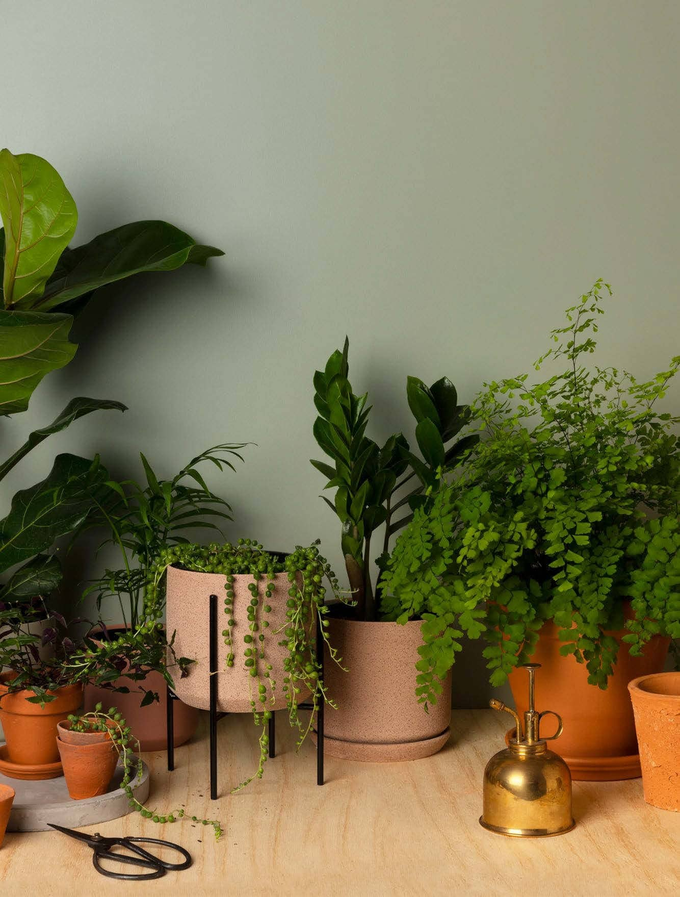 Top 10 Indoor Plants (And How To Keep Them Alive)