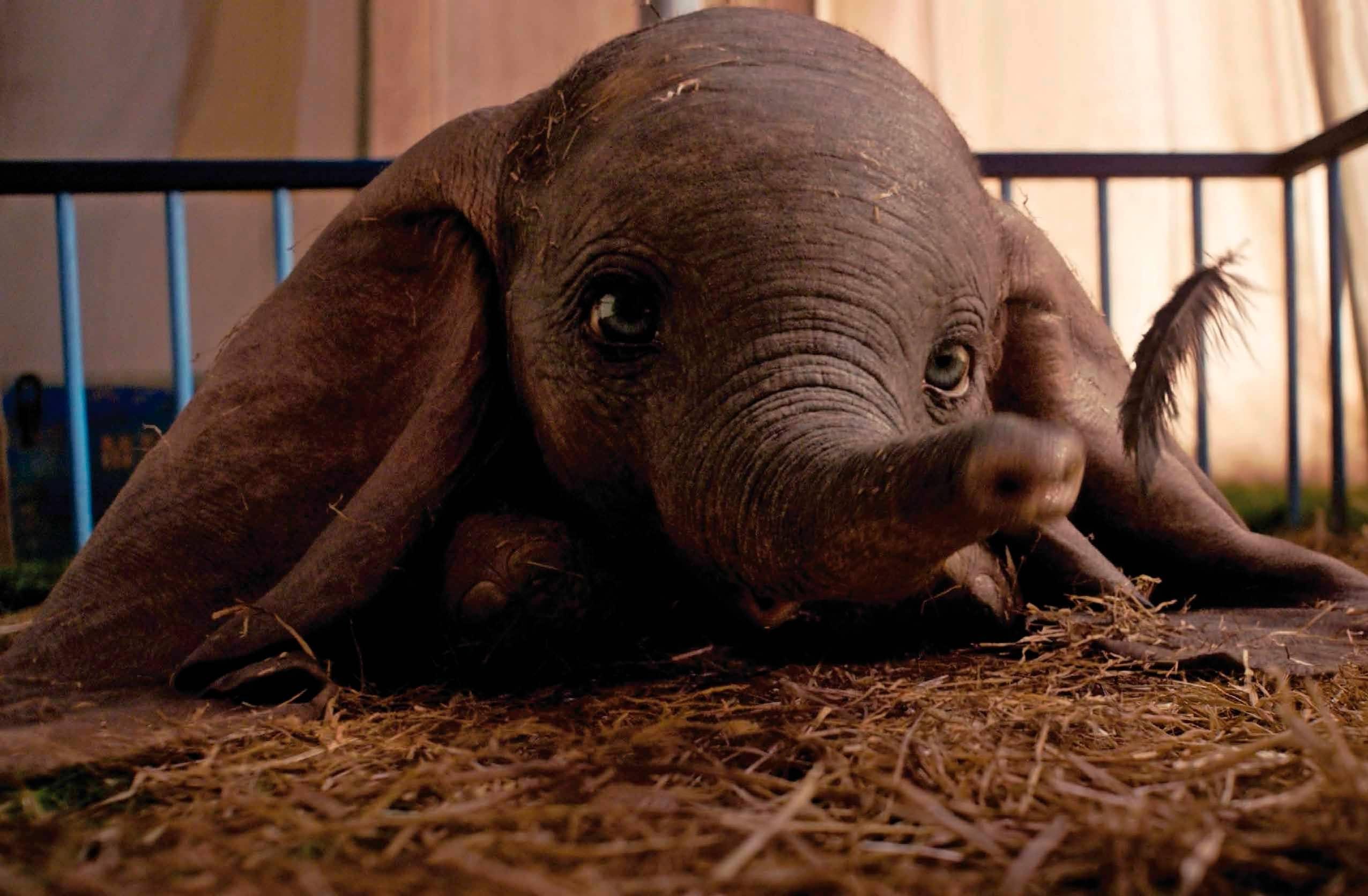 Dumbo y el mundo políticamente correcto
