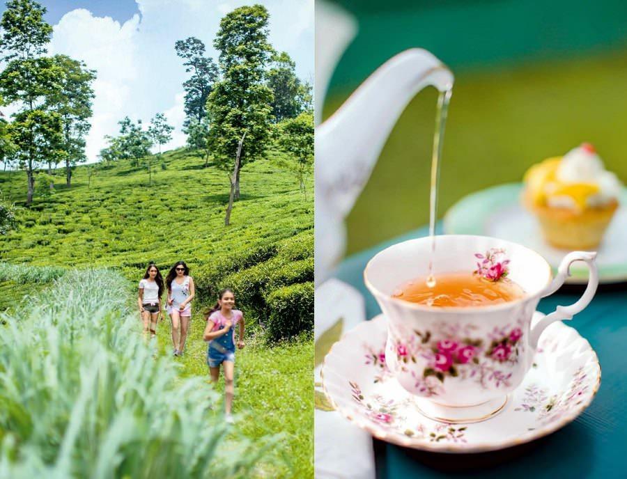 Tea, Scones & Famjam In Darjeeling