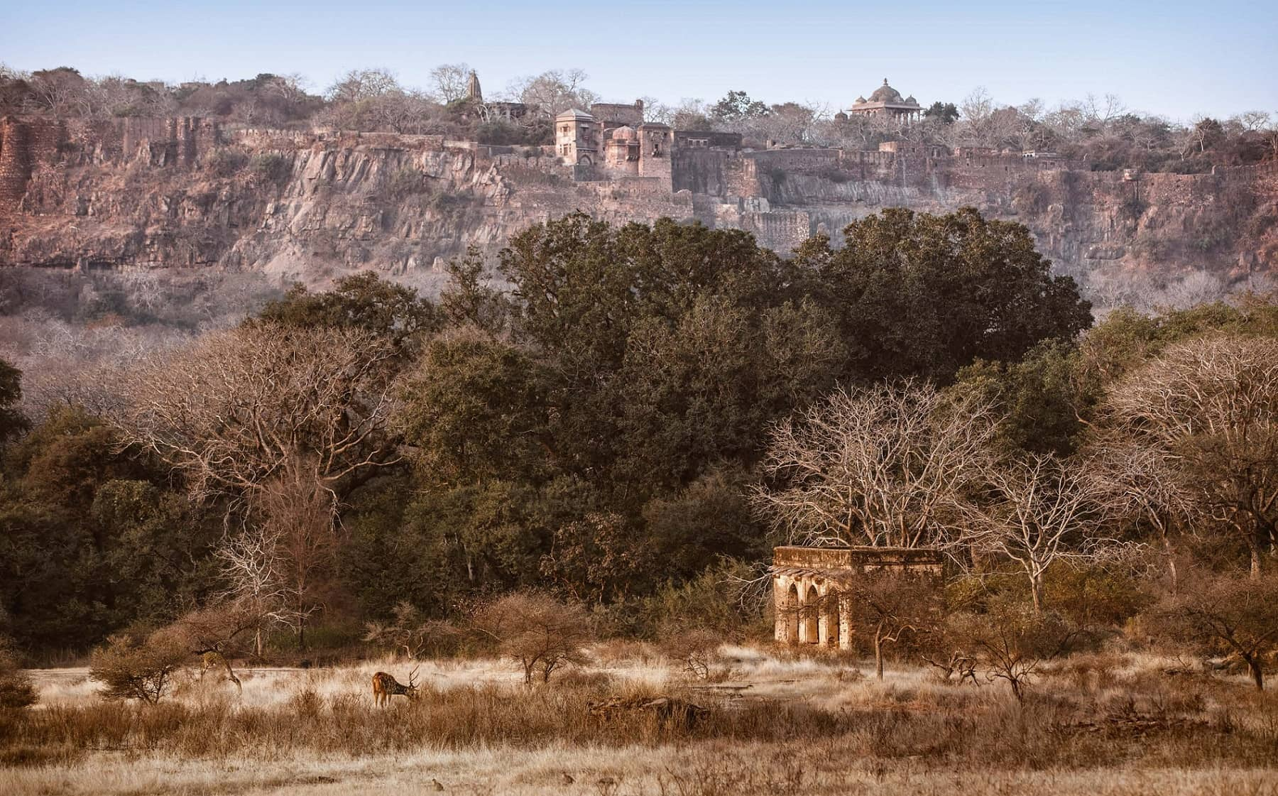 Ranthambore: Beyond The Tiger