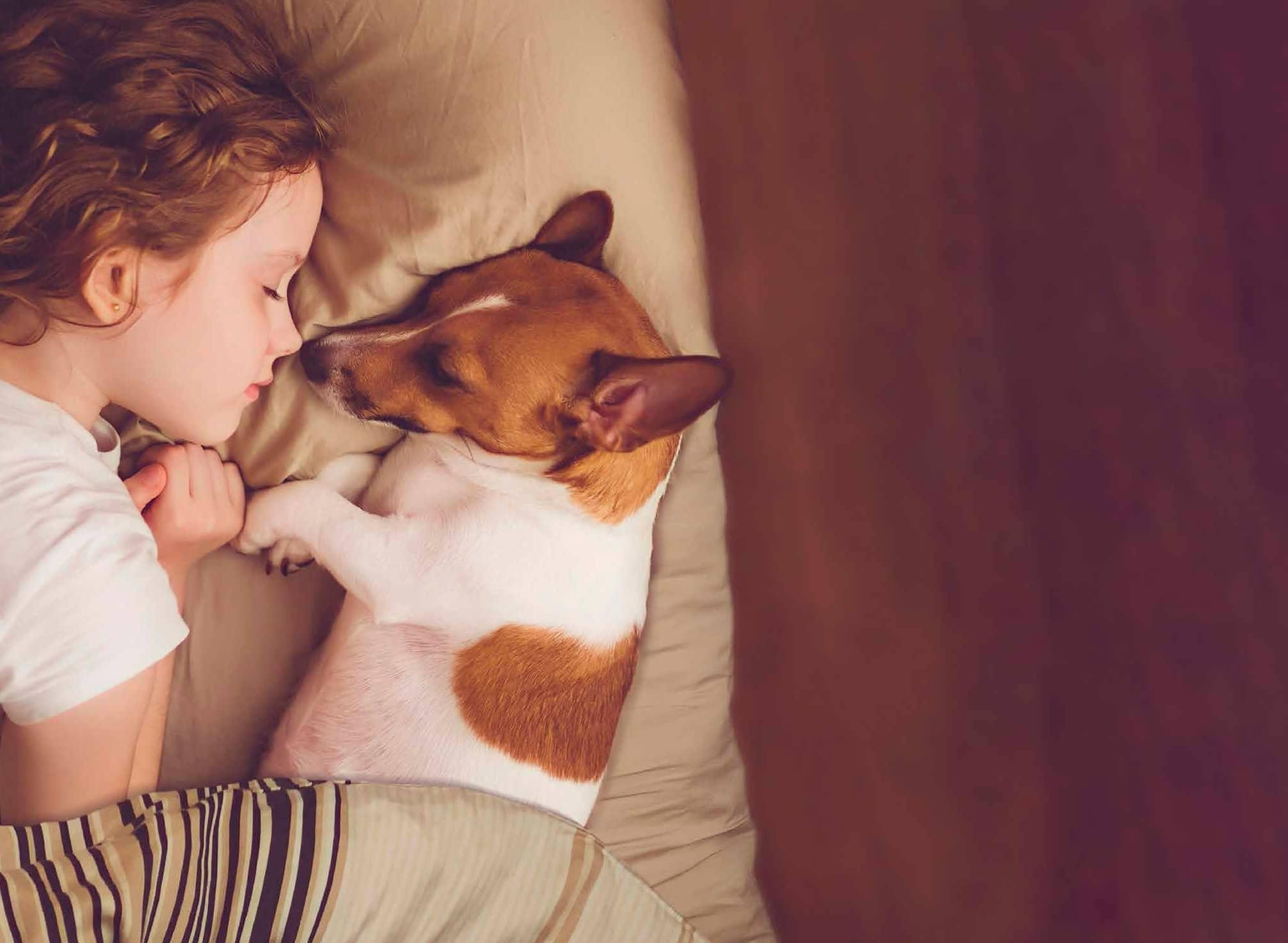 Muchos Aprendizajes Positivos.  Mascotas, Los Pros Para Tu Hijo