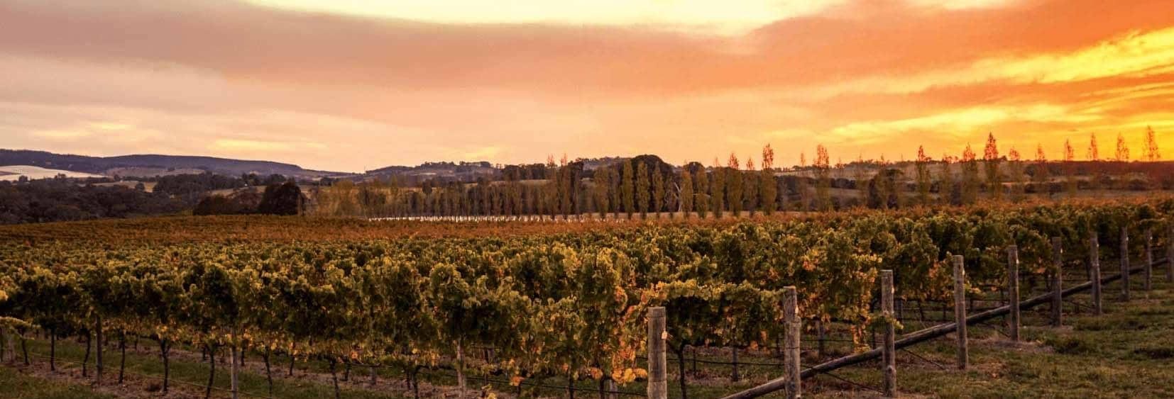 DISCOVERING AUSSIE WINES