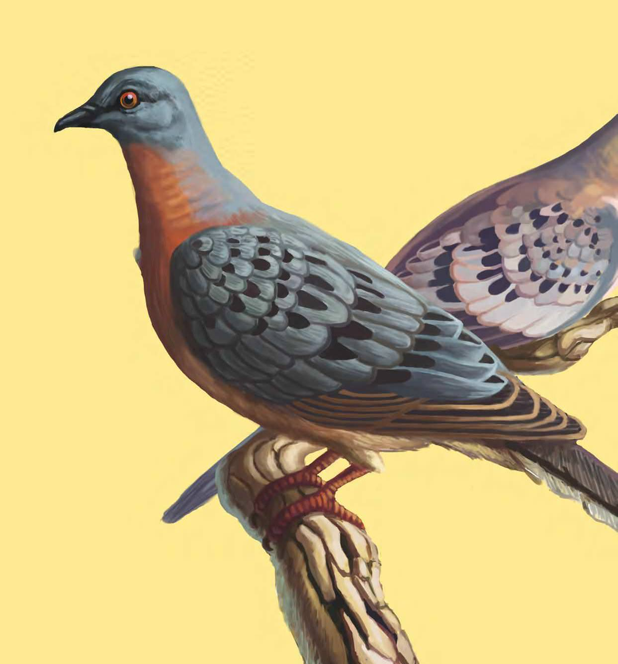 Bringing The Passenger Pigeon Out Of Extinction