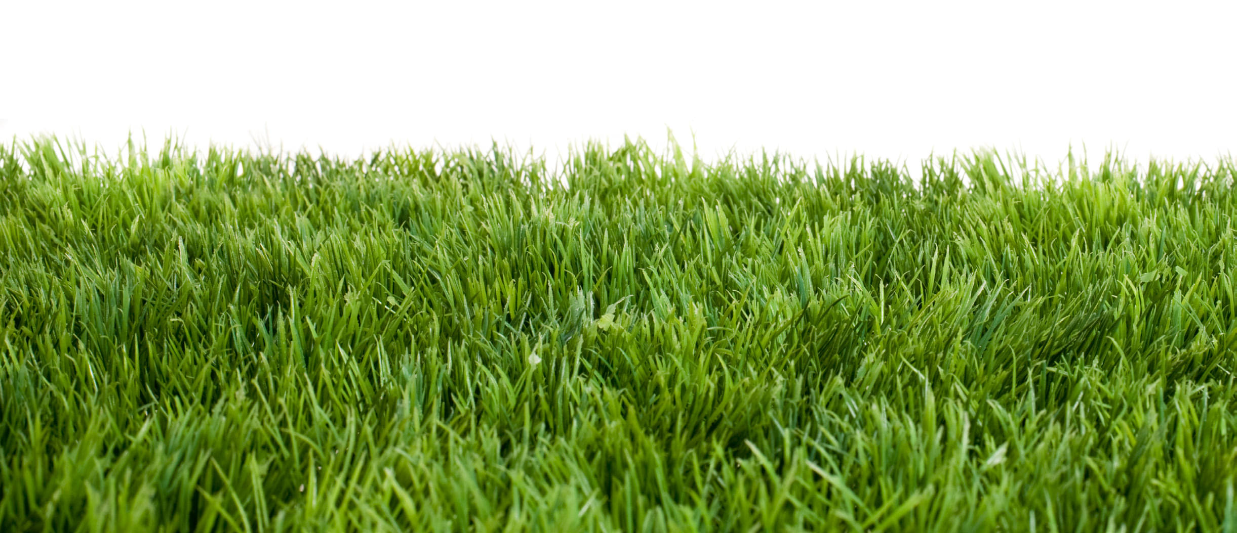 A Florida Retiree's Uncut Lawn May Cost Him His House