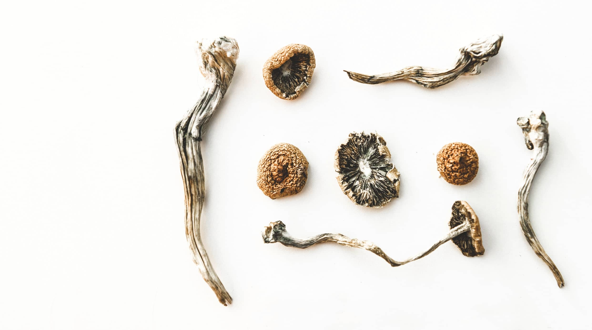 SHROOMS ARE ON THE D.C. BALLOT