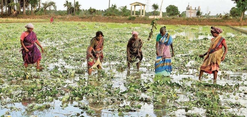 Re-Imagining Farmers' Welfare