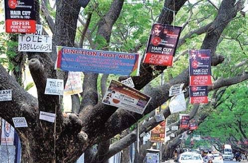 Damaging Corporation Trees To Invite Hefty Fine, Jail Term