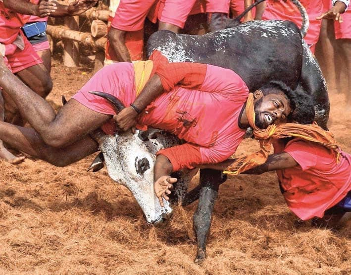 Student Among Two Killed In Separate Jallikattu Events