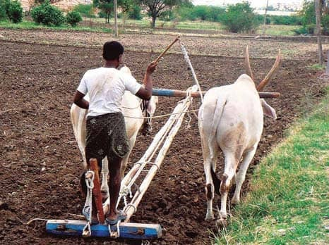 Income Scheme To Cover Fewer Farmers