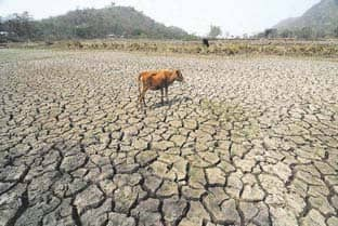 India To Restore More Degraded Land