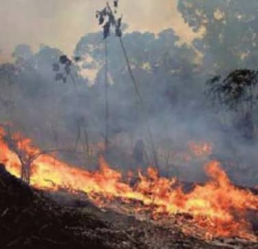 The Amazon Fires, An Alarm That Lacks Proportion