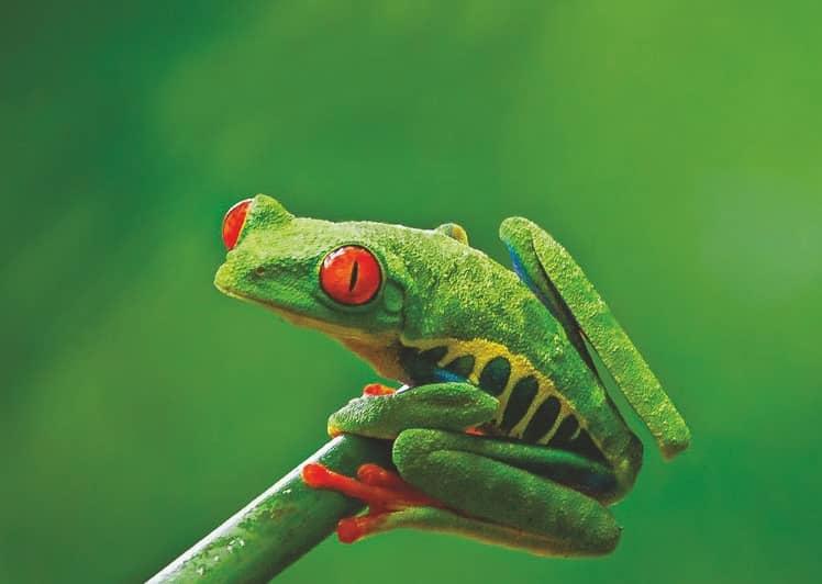 Frog The Adaptive Genius