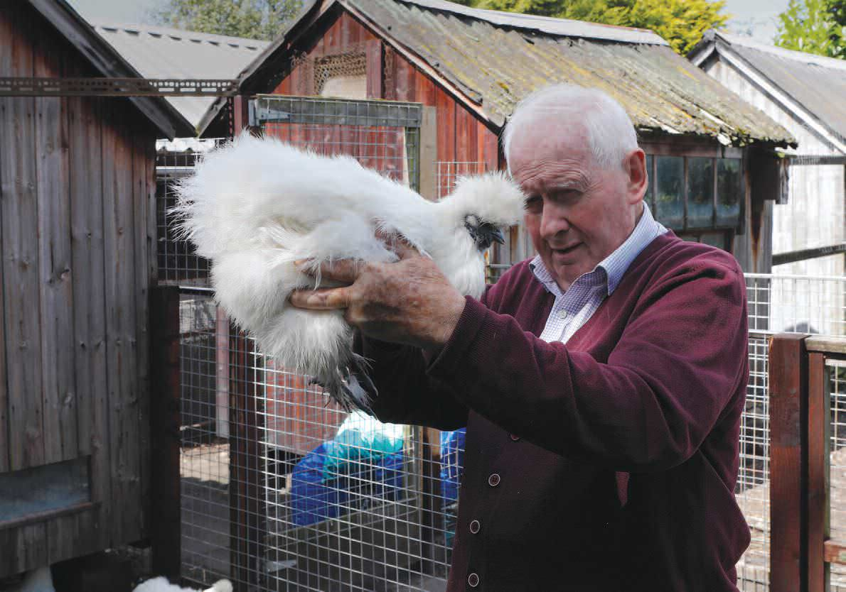 And On That Farm There WereSome Silkies