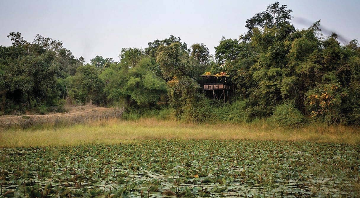BP Pench Wildlife Photography Masterclass with Pugdundee Safaris