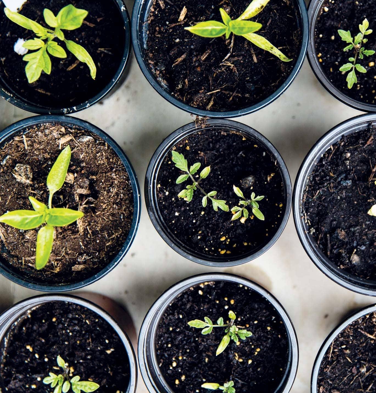 Backyard OASIS Grow your Greens